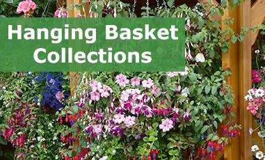plug plant collections babyplants. Black Bedroom Furniture Sets. Home Design Ideas