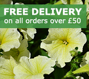 Free Delivery on all Plug Orders over £50