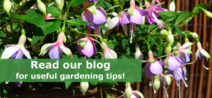 We have useful plug plant tips on our blog!