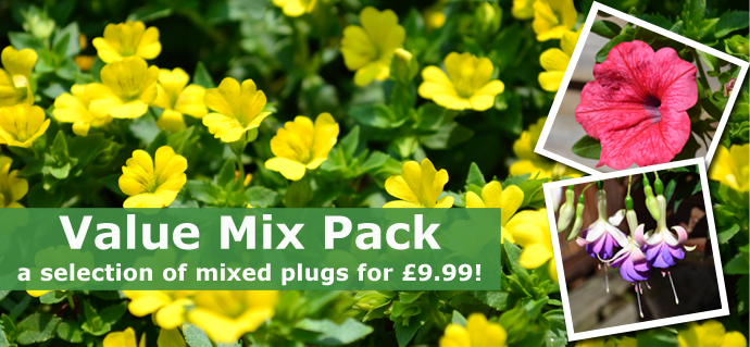 Value Mixed Plug Plant Pack!