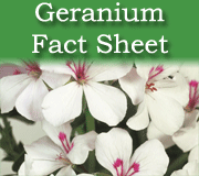 Geranium Fact Sheet