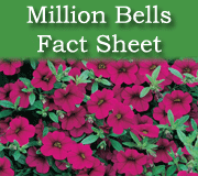 Million Bells fact sheet