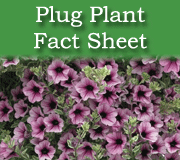 Click here to view the plug plant fact sheet