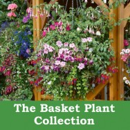 The Basket Plant Collection