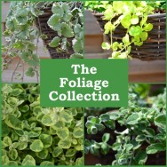 The Foliage Collection (6 plug plants)