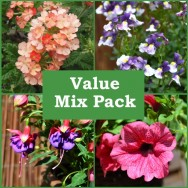 Value Mix Pack of 12 Plug Plants