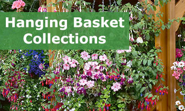 Hanging Basket Plug Plant Collections
