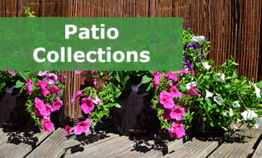 By Patio Plug Collections Online