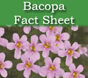 Bacopa fact sheet