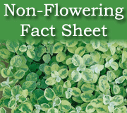 Click here to view the non-flowering fact sheet