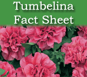 Click here to view the Tumbelina fact sheet