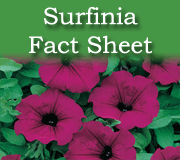 Surfinia Fact Sheet