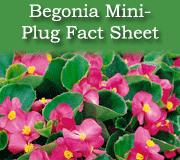Mini-plug begonias fact sheet