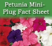 Click here to view the mini-plug petunia fact sheet
