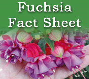 Click here to view our fuchsia fact sheet pdf