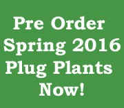 Pre-order Spring 2016 Plug Plants Now!