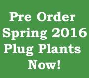 Pre-order Spring 2016 Plug Plants Now!