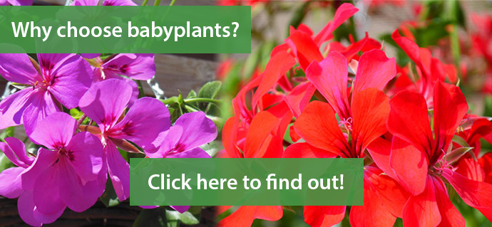Find out what makes babyplants special