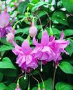 N06381_Fuchsia Pink Galore