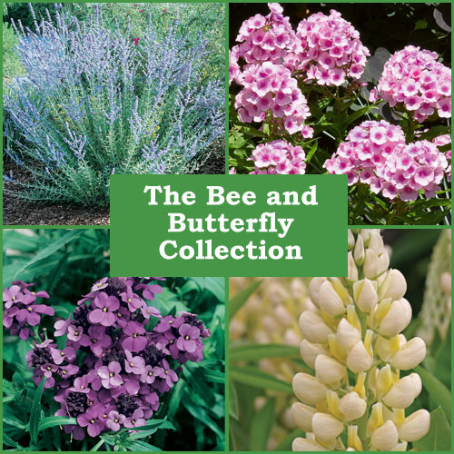 The Bee And Butterfly Collection (6 Plug Plants)