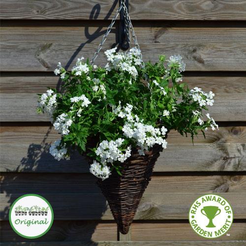 Verbena trailing samira white plug plant mightylinksfo