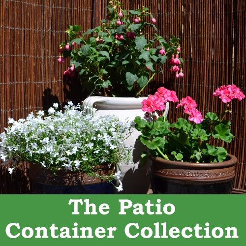 The Patio Container Collection