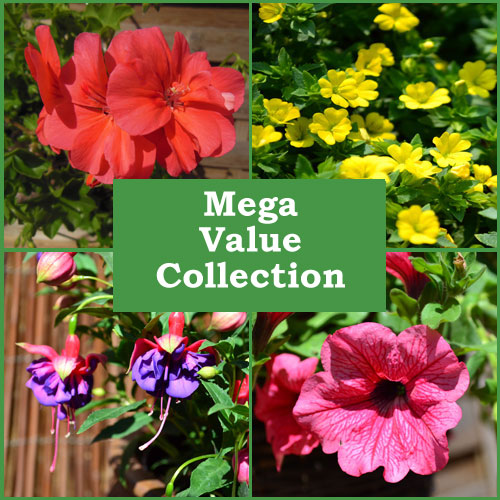 Mega Value Collection (46 Plug Plants)