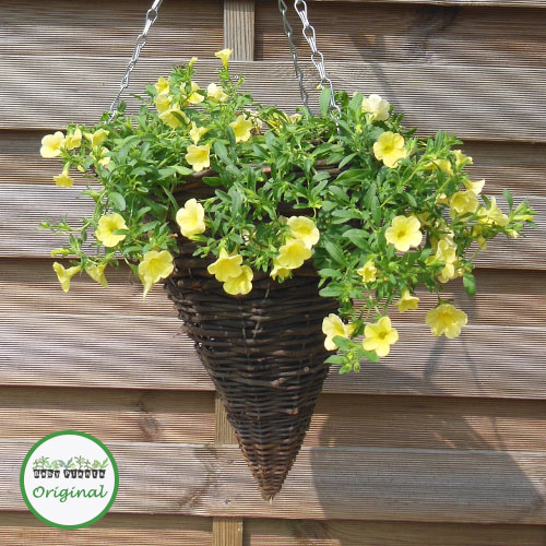 Million Bells® Bouquet Yellow Eye Plug Plant